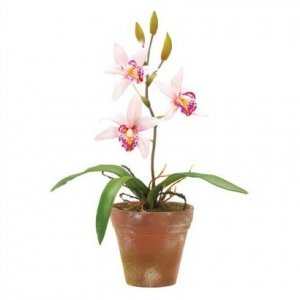 10 in. Pink Orchids in Pot