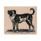 NEW Dog Looking RUBBER STAMP, Dog Stamp, Concerned Dog Stamp, Dog Standing Stamp