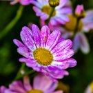 Pink Fall Flowers Digital Art Image Photograph
