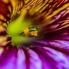 Macro Azelia Flower Digital Art Image Photograph