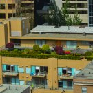 Rooftop Green Space Digital Art Image Photograph