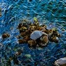 Mossy Rocks Digital Image Art Photograph