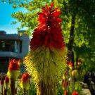 Orange and Neon Flower Digital Art  Image Photograph