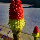 Orange and Neon Flower 2 Digital Art  Image Photograph