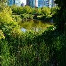 City Pond Digital Art Image Photograph