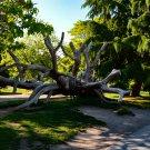 Fallen Tree Park Digital Art Image Photograph