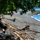 Log Strewn Beach Digital Art Image Photograph