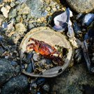 Ocean Crab Digital Art Image Photograph