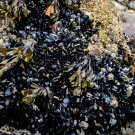 Seaweed Rock 1 Digital Art Image Photograph