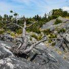 Tree Growing Flat Digital Art Image Photograph