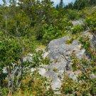 Forest Cliff Digital Art Image Photograph