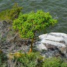Tree By The Ocean Digital Art Image Photograph