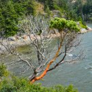 Cliff Hanging Tree Digital Art Image Photograph