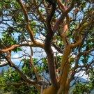 Red Bark Tree Digital Art Image Photograph