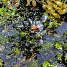 Shells and Seaweed Digital Art Image Photograph