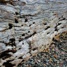 Log On A Rocky Beach Digital Art Image Photograph