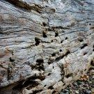 Log On A Rocky Beach 1 Digital Art Image Photograph