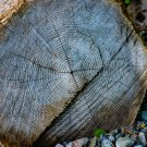 Cut Log Digital Art Image Photograph