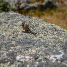 Chickadee Bird On A Rock Digital Image Art Photograph