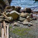 Logs On A Rocky Beach Side Digital Art Image Photograph