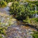 Forest River Digital Art Image Photography