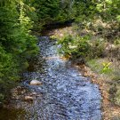 Forest River 1 Digital Art Image Photography