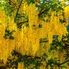 Yellow Flower Cluster Tree Digital Art Image Photograph