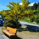 Yellow Tree and Bench Digital Art Image Photograph