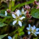 Little White Flowers Digital Art Image Photograph