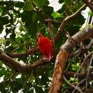 Pink Tropical Bird Digital Art Image Photograph