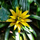 Yellow Tropical Flower Digital Art Image Photograph