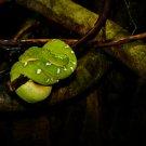 Green Tree Snake Digital Art Image Photograph