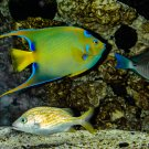 Neon and White Fish Digital Art Image Photograph