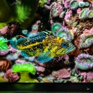 Yellow and Black Fish in Rainbow Hiding Digital Art Image Photograph