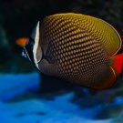 Tropical Fish Digital Art Image Photograph