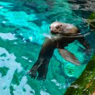 Curious Seal Digital Art Image Photograph