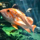 Swimming Orange Fish Digital Picture Art Image