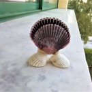 Handmade composition of 4 different kinds seashells, (Prawn), (St James's Scallop) (021)