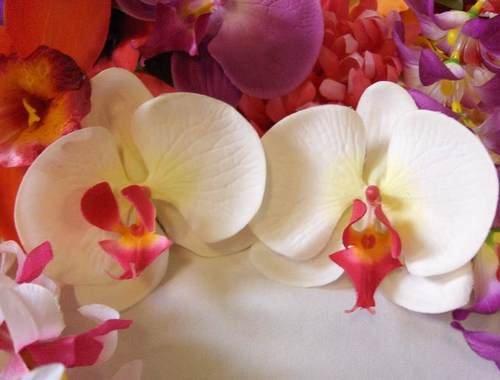 White Hawaiian orchid flower hair clip pair Wedding