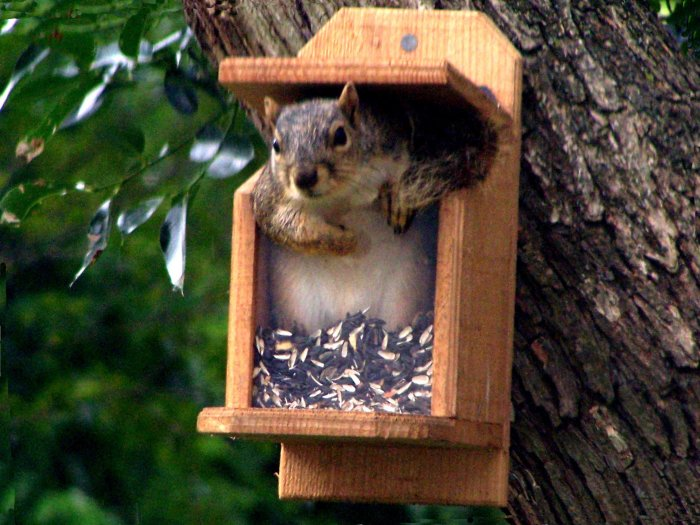 New hand made Squirrel feeder - Seed and Nut Feeder