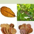 Organic Indian Almond leaves Terminalia Catappa Ketapang for Shrimp Aquarium Fish Food.5-8 inches.