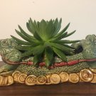 Succulent Echeveria HEALTHY LIVE PLANT ABOUT 2 YEAR IS OLD 6 inch in diameter