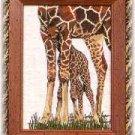Framed Giraffe Picture