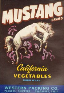 LOT of 10 all the Same Original Mustang Vegetables Crate Label Bucking Horse