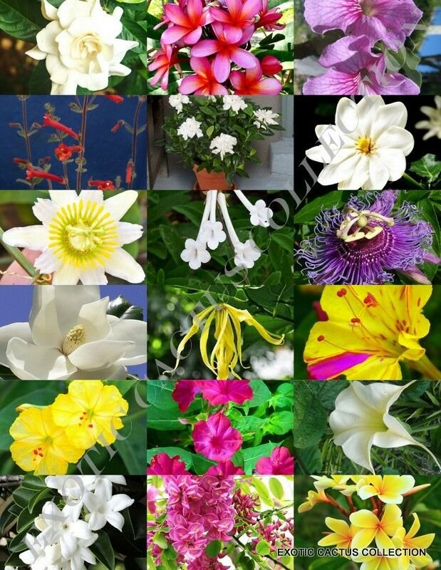 Fresh Seeds FRAGRANT FLOWERS MIX rare plant exotic flower colorful easy garden seed 15 seedsFrom US