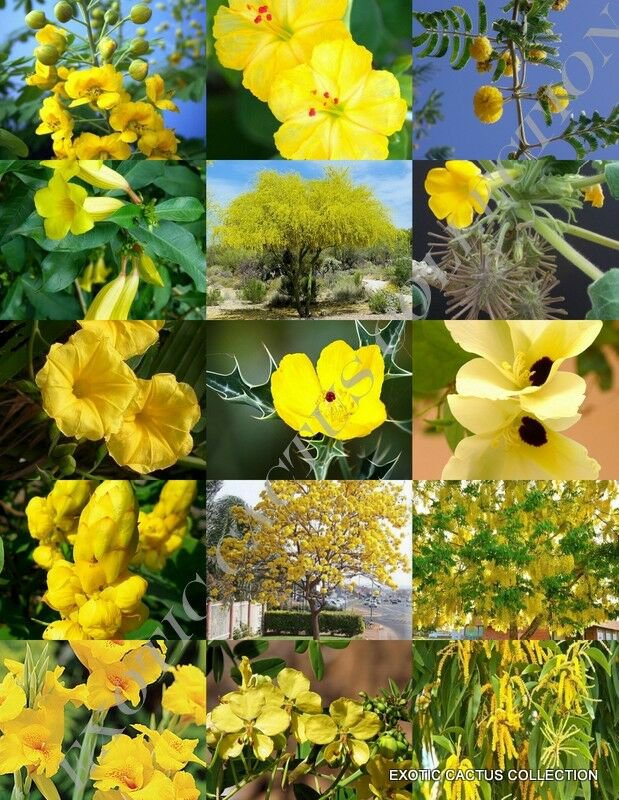 Rare  Yellow Flower Plants Mix Exotic Garden Tree Fragrant Bonsai Bloom Seed 15 Seeds Fast Shipping