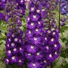 Purple Passion Delphinium Knight Delphinium Mix Seeds Perennial Garden 50 seeds/ pack
