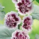 Double Purple Hollyhock 25 Seeds Perennial Giant Flower Garden