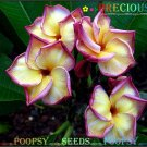 Precious Plumeria Cultivars Frangipani Hybrid Indoor Plant 5 Seeds Per Pack