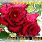 Dang Hassadee Trending To Sell Adenium Obesum Desert Rose 5 seeds